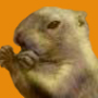 Le siffleux et la corneille -